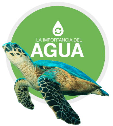 https://tsj.com.co/wp-content/uploads/2020/02/importancia-agua.png